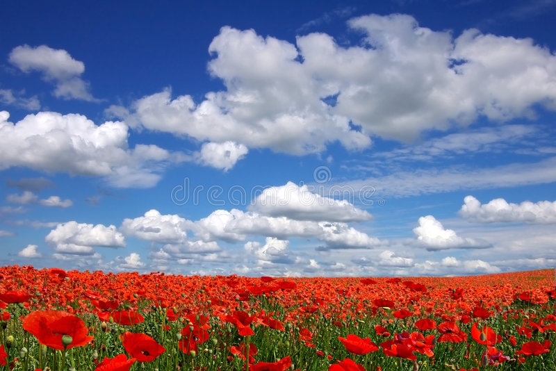 Download Malerische Landschaft Mit Mohnblumeplantage Stockfoto - Bild von jahreszeit, ansicht: 9099194