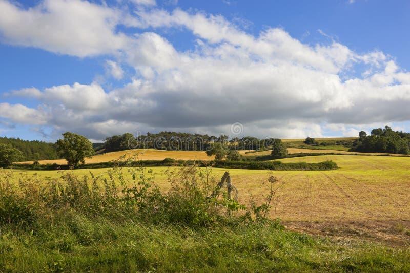 Malerische landwirtschaftliche Landschaft lizenzfreie stockfotos