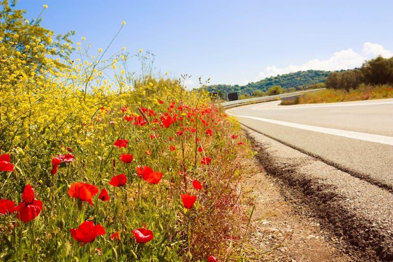 Malerische Straße in Tuskany umgab durch Mohnblumenfelder stockbild