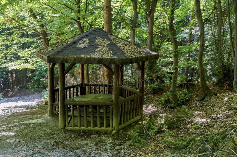 Malerische Weise durch grünen Wald mit Nische stockfoto