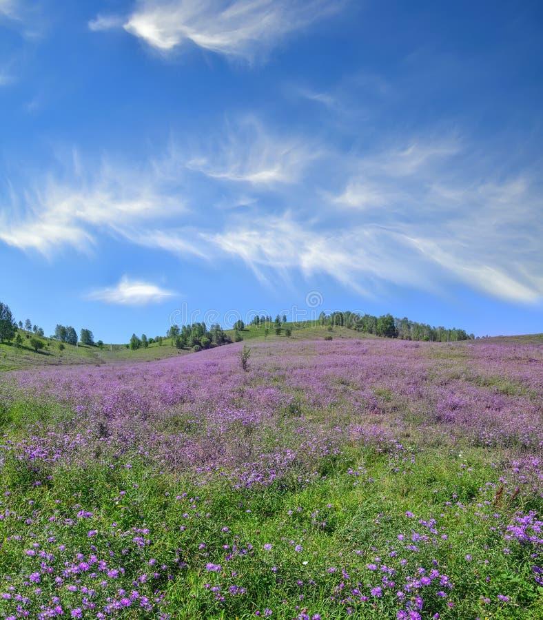 Malerischer Gebirgsblühende Wiese - bunter Sommer Landscap stockbild