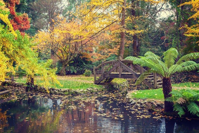 Malerischer hölzerner Steg über einem Teich mit goldenen Bäumen und stockbilder