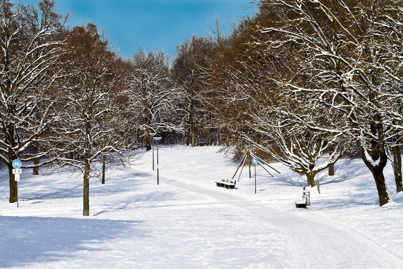 Malerischer Wald im Winter lizenzfreie stockfotografie