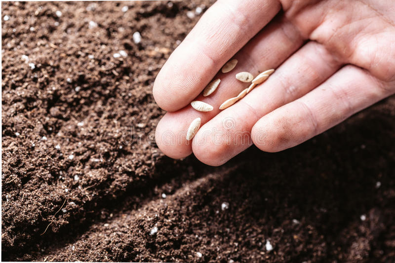 Males hand planting seeds. Closeup of a males hand planting seeds stock photos