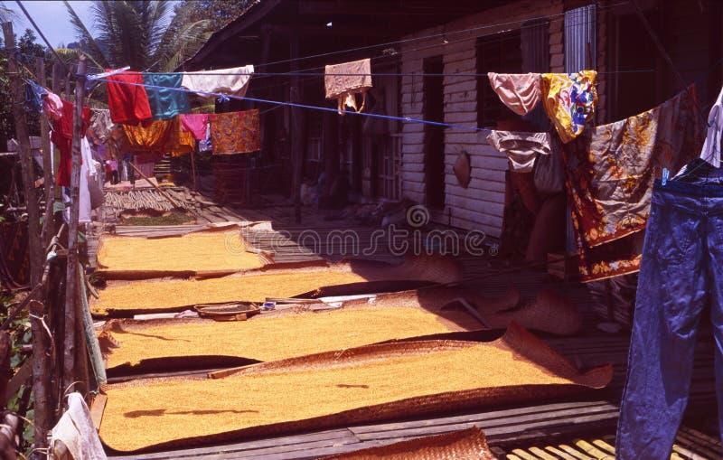 Malezja, Borneo/: Iban Headhunter wioska w lesie tropikalnym blisko Jeziornego Batang Ai w Sarawak obraz royalty free
