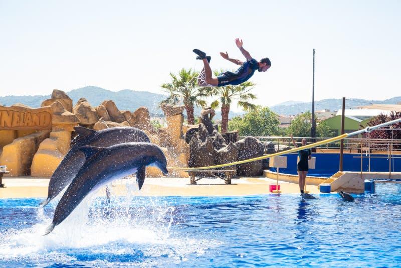 Malgrat de Fördärva, Spanien Juni 19, 2018 Delfinshow i Marineland fotografering för bildbyråer
