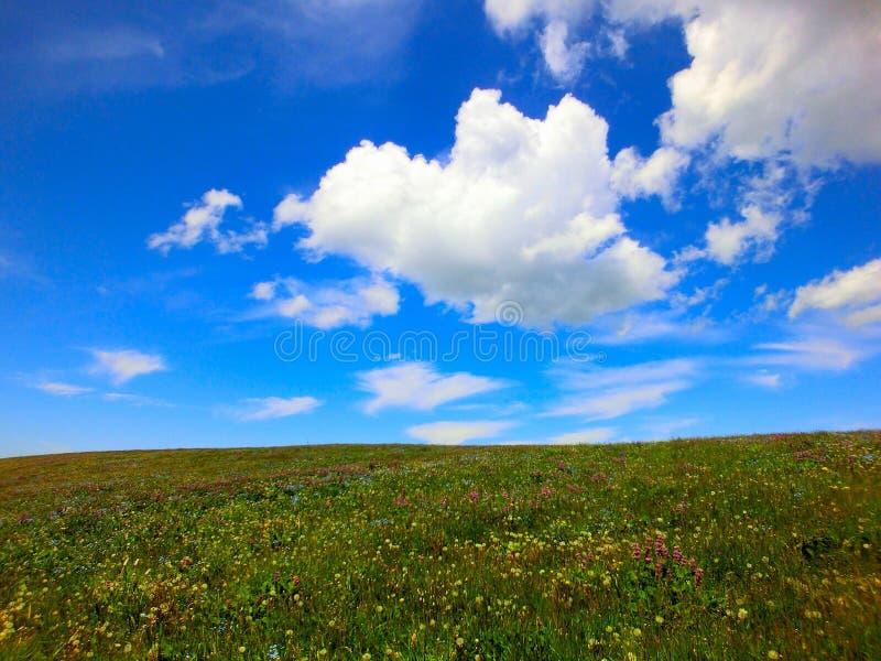 Mali żółci kwiaty r po całym obszar trawiasty zdjęcia stock