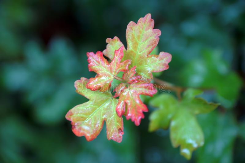 Mali acorn jesieni liście zdjęcie royalty free