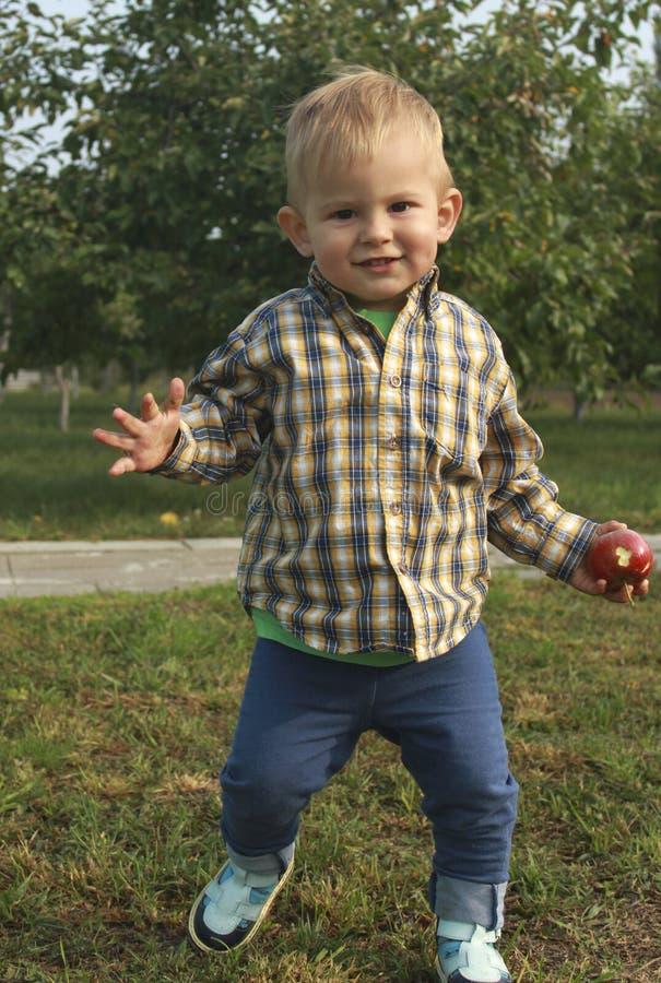 Mali berbeć chłopiec łasowania i zrywania czerwoni jabłka w sadzie obraz royalty free