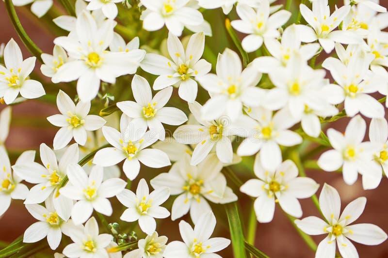 Mali Biali kwiaty fotografia stock