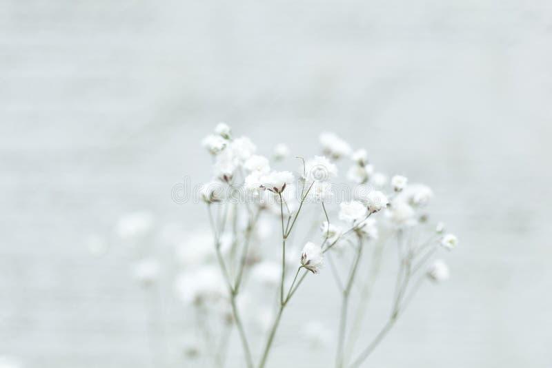 Mali biali kwiaty na abstrakcjonistycznym tle Łyszczec kwiat zdjęcia stock