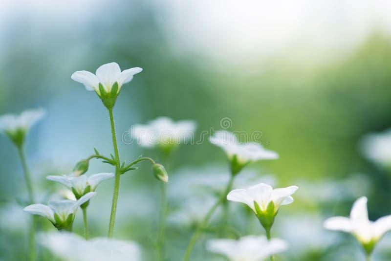 Mali biali kwiaty na pięknym tle Selekcyjna ostrość fotografia stock