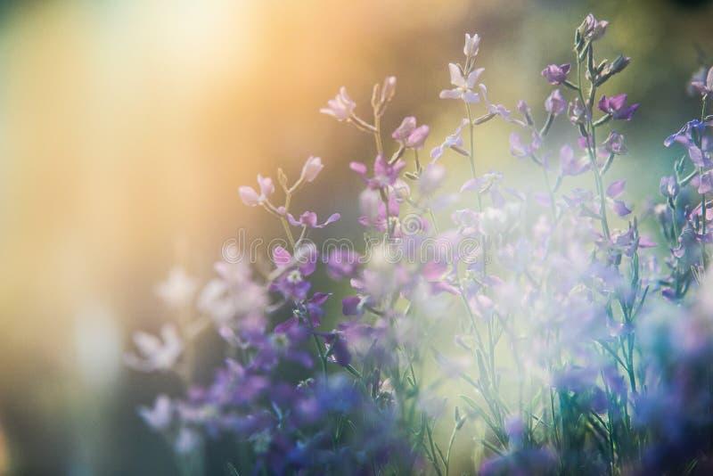 Mali bzów kwiaty zdjęcia royalty free