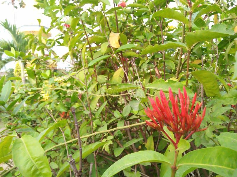 Mali czerwień kwiaty które powstają na roślinie zdjęcie stock