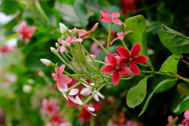 Mali czerwieni i menchii kwiaty zdjęcie royalty free