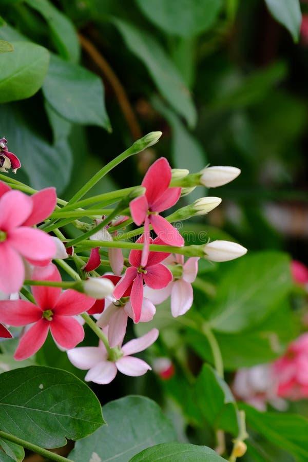 Mali czerwieni i menchii kwiaty obraz stock