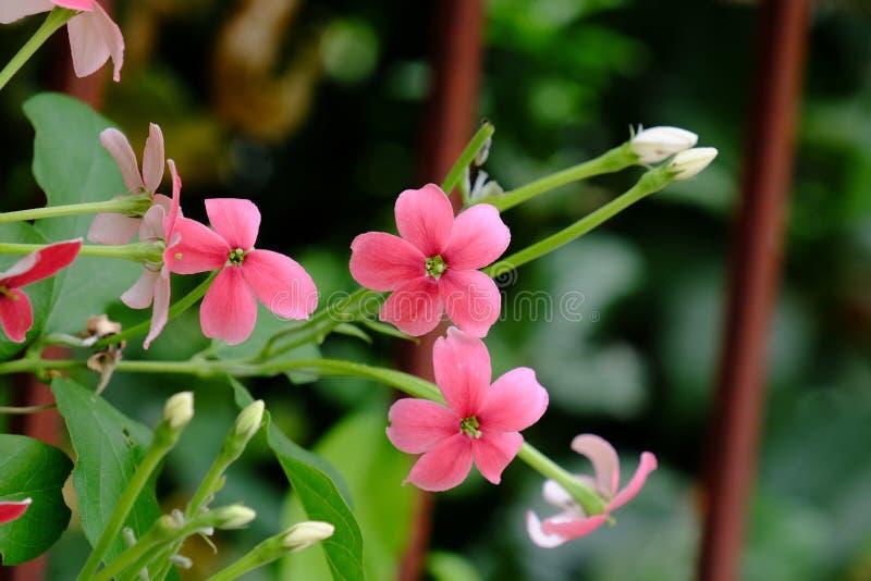 Mali czerwieni i menchii kwiaty obraz royalty free