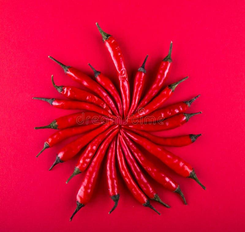 Mali czerwonego chili pieprze w okręgu kształtują na czerwonym tle Mieszkanie nieatutowy Odgórny widok overhead kosmos kopii zdjęcie stock