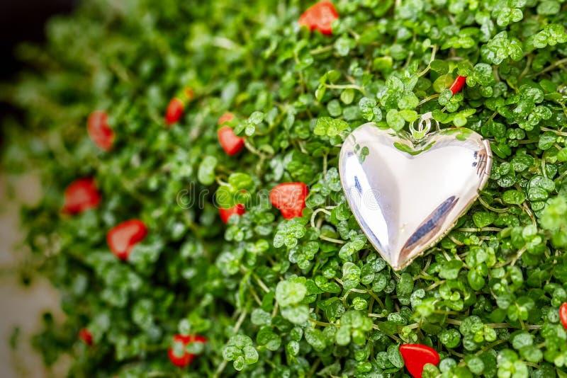 Mali czerwoni i srebni serca na zielonej trawie obrazy stock