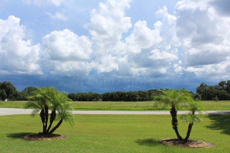 MALI dekoracj drzewka palmowe zdjęcie stock