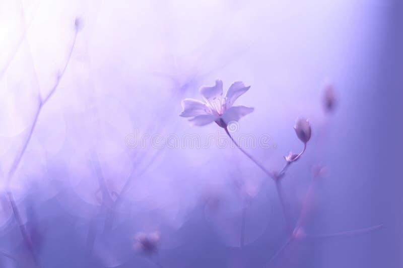 mali delikatni kwiaty obraz stock