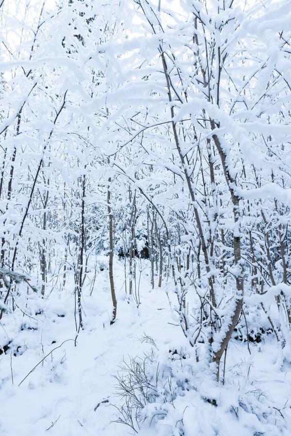 Mali drzewa zakrywający w śniegu obrazy stock