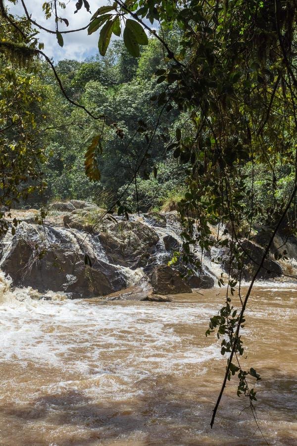 Mali gwałtowni na rzekach w dżunglach Kakamega Lasowy Kenja, Afryka zdjęcia royalty free