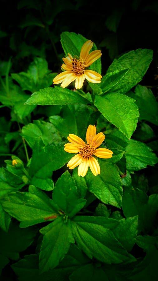 Mali kolor żółty kwiaty fotografia stock