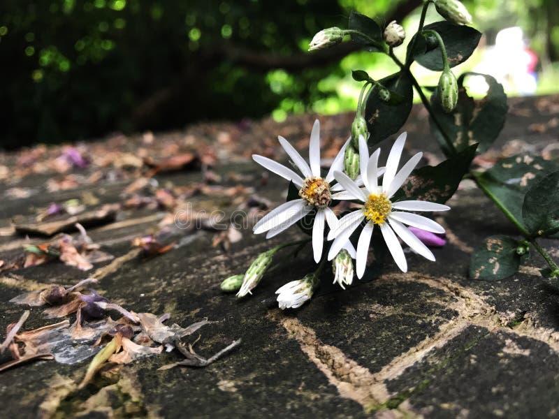 Mali kwiaty obrazy royalty free