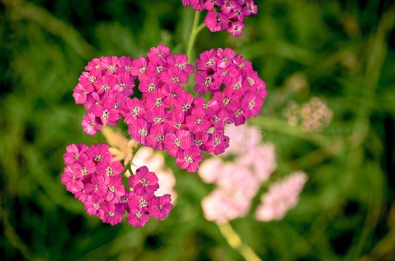 Mali kwiaty pole zdjęcia royalty free