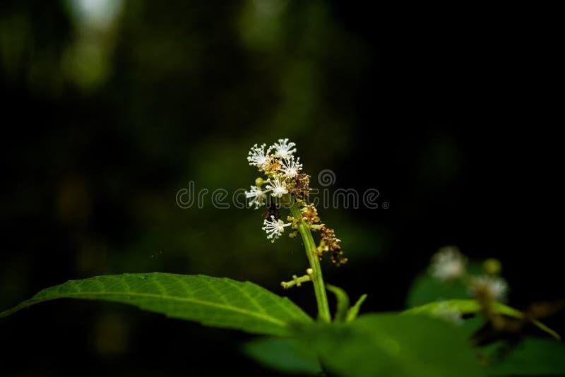 Mali kwiaty w tropikalnym lesie tropikalnym zdjęcie royalty free