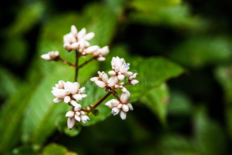 Mali kwiaty w tropikalnym lesie tropikalnym zdjęcia royalty free