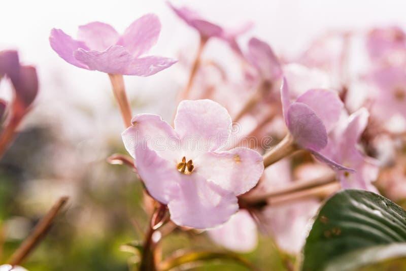 Mali kwiaty w tropikalnym lesie tropikalnym zdjęcie stock