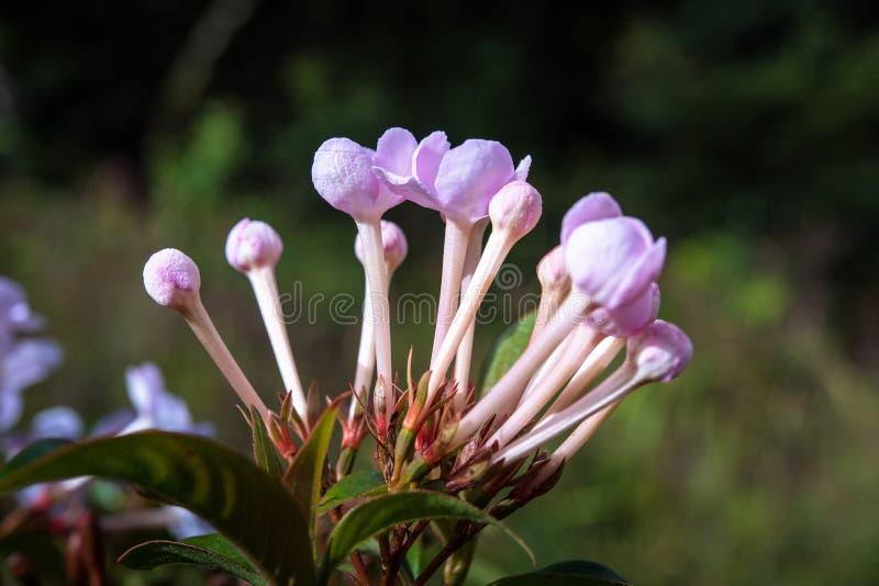 Mali kwiaty w tropikalnym lesie tropikalnym obraz stock