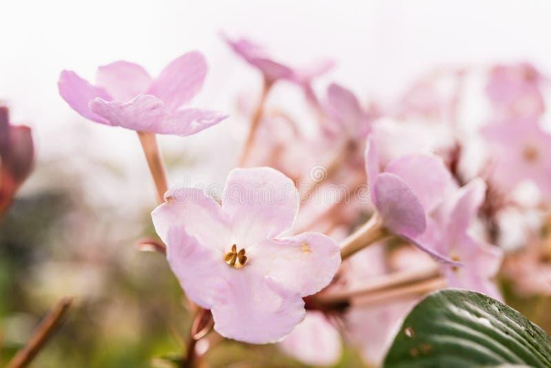 Mali kwiaty w tropikalnym lesie tropikalnym obrazy royalty free