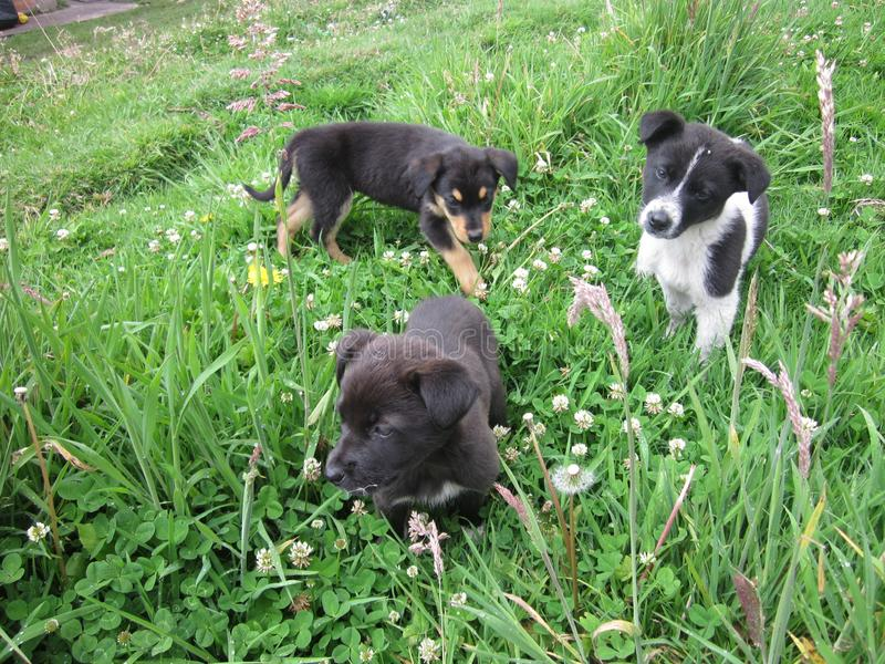 Mali psy w naturze obraz royalty free