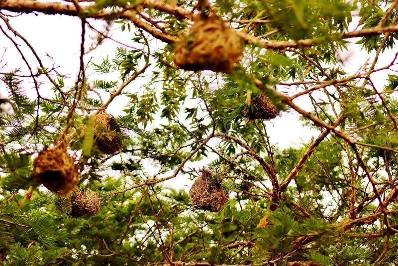Mali ptaki gniazdują na drzewie obraz stock