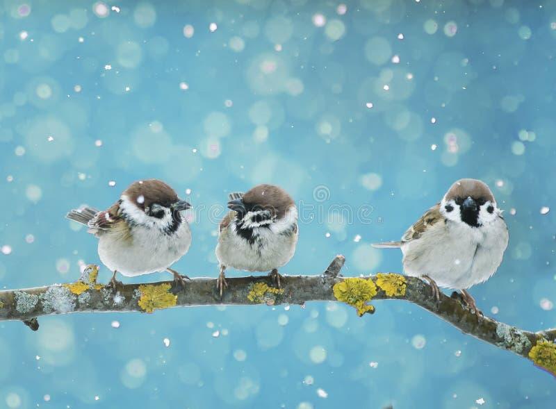 mali ptaki siedzi na gałąź w spada śniegu w zdjęcie royalty free