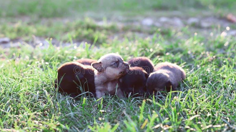 Mali puppys na zielonej trawie, bawić się w lato parku Mały śliczny psa tło z przestrzenią dla twój projekta lub teksta obraz royalty free
