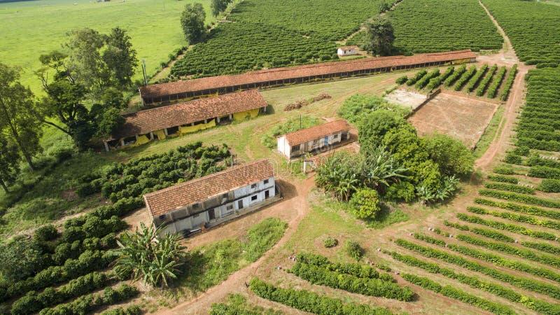 Mali rolni kurczaki i kawa we wnętrzu Brazylia zdjęcia stock
