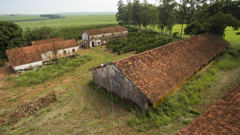 Mali rolni kurczaki i kawa we wnętrzu Brazylia fotografia stock