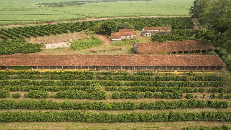 Mali rolni kurczaki i kawa we wnętrzu Brazylia zdjęcie royalty free