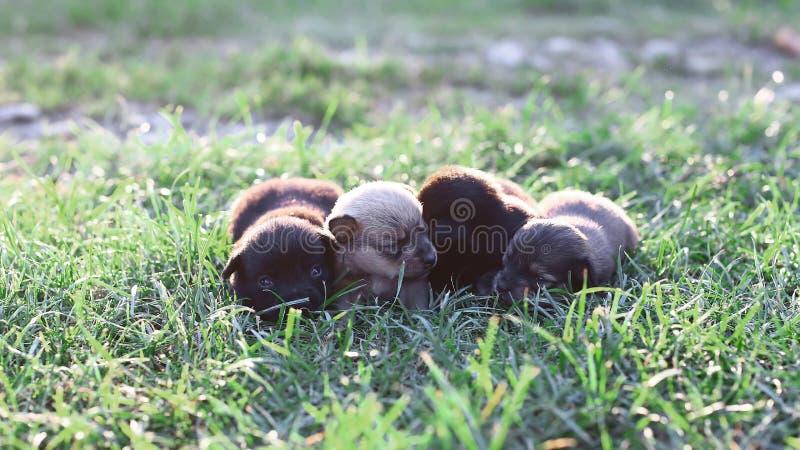 Mali sypialni szczeniaki kłama na pięknej zielonej trawie Mały śliczny psa tło z przestrzenią dla twój projekta lub teksta zdjęcia stock