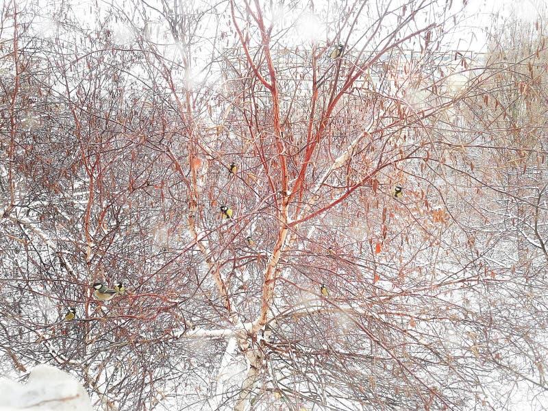 Mali titmouses dalej siedzą na drzewie pod opad śniegu fotografia stock