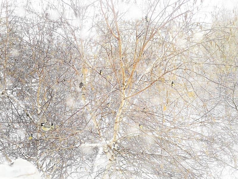 Mali titmouses dalej siedzą na drzewie pod opad śniegu liczba 2 fotografia stock