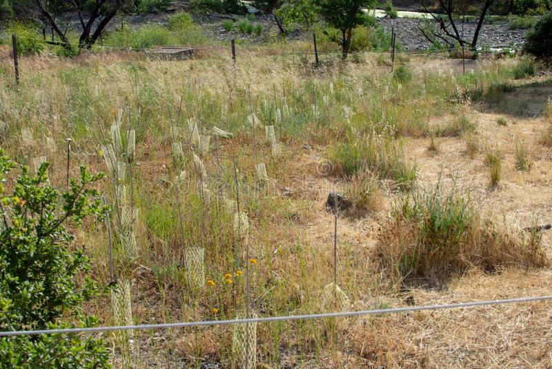 Malibu zatoczki stanu park - Maj 11, 2019: Znaki ochraniaj? odzyskuje ro?liny Malibu zatoczki stanu park w wio?nie i drzewa obrazy stock