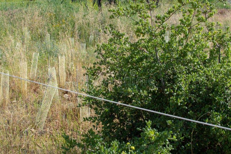 Malibu zatoczki stanu park - Maj 11, 2019: Znaki ochraniaj? odzyskuje ro?liny Malibu zatoczki stanu park w wio?nie i drzewa obrazy royalty free