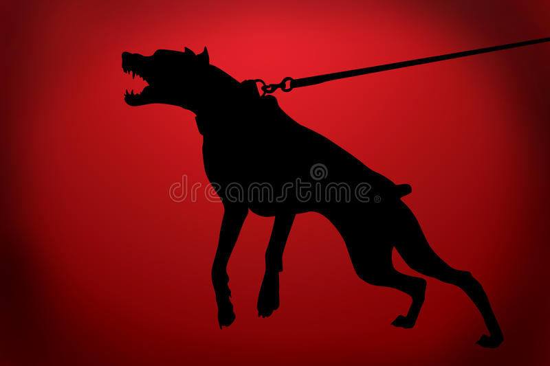 The malicious doberman dog