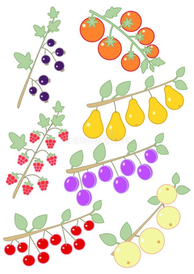 Malinki, czarni rodzynki, pomidory, śliwki, jabłka, wiśnie i bonkrety, royalty ilustracja