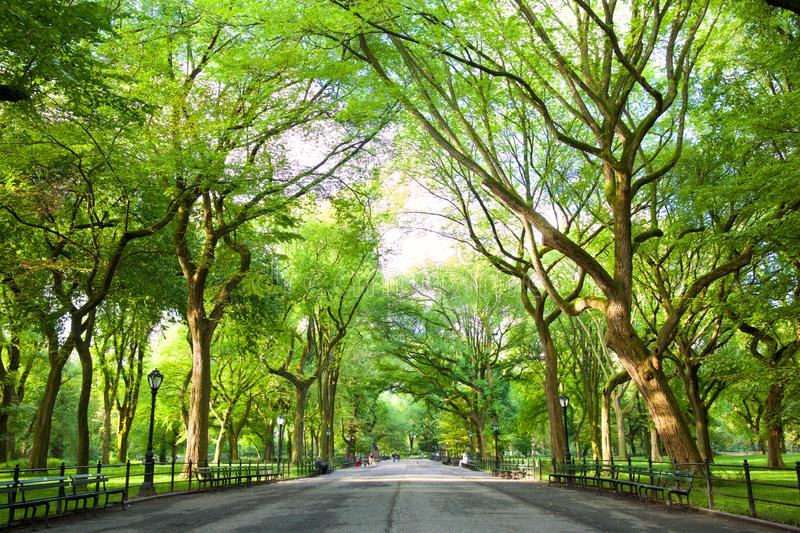 The Mall in Central Park. The Mall with American Elms in Central Park, New York royalty free stock images